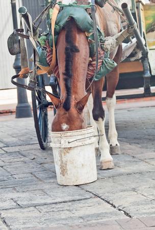 canto: carriage bay horsein Canto Domingo, Dominican Republlic