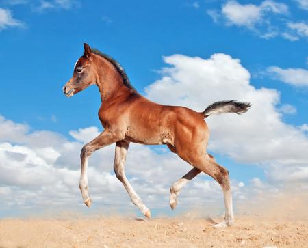 drafje: veulen paardje kindje run draf