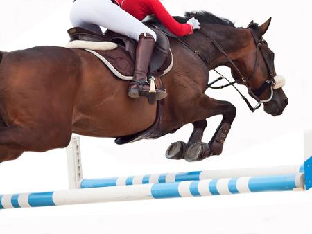 Jumping horse isolated on white Standard-Bild