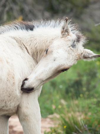 herbal knowledge: portrait of cream foal. Israel