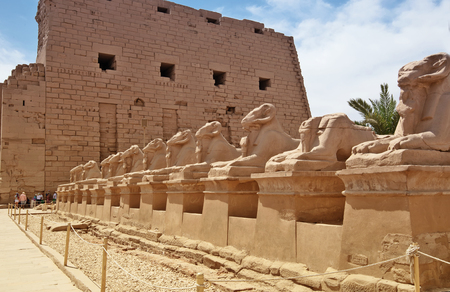 past civilization: ancient egypt statues of sphinx in Luxor karnak temple