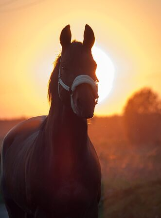 against the sun: portrait of horse against sun. sunset Stock Photo