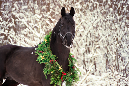 christmas portrait of black beautiful horse