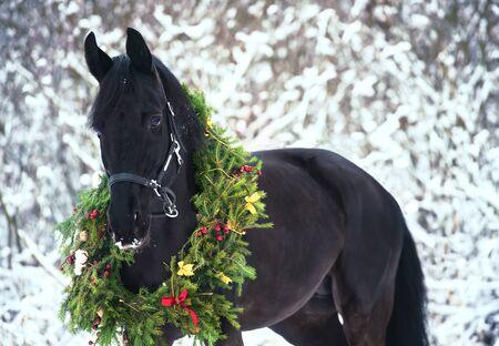 Christmas portrait of black beautiful horse
