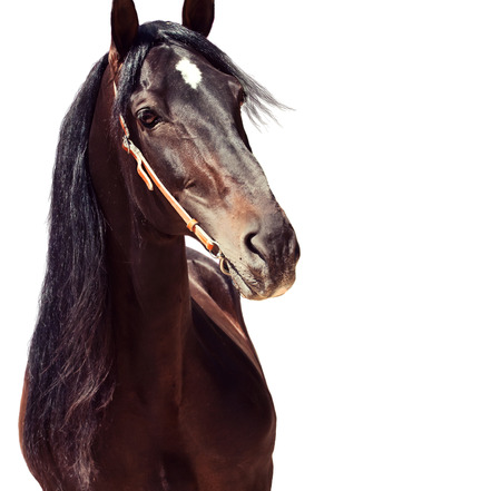 equine: beautiful purebred Andalusian stallion at flowers background, sunny day. Spain Stock Photo