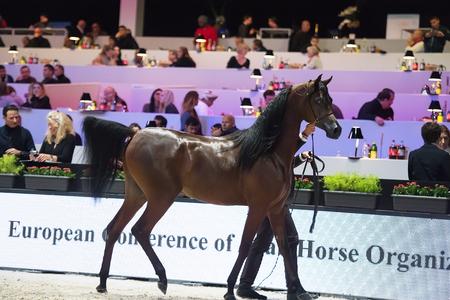 Arabian horse world championship, Nord Villepente in Paris. PARI Editorial