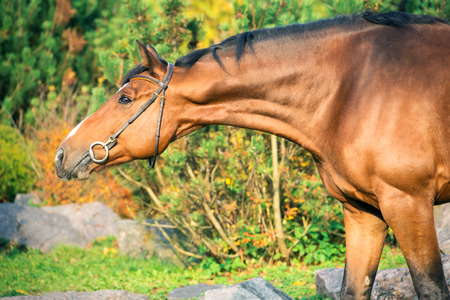 portrait sportive warmblood horse posing against stable Reklamní fotografie - 112007227