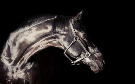 Portrait of beautiful black horse around black background. studio shot
