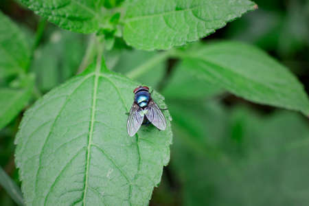 house fly on the leaf
