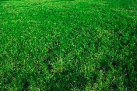 fresh green grass on the field, green grass texture Stock Photo