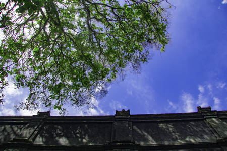 high wall looking to up with tree and blue sky in Tomb of the Imogiri Kings on yogyakarta