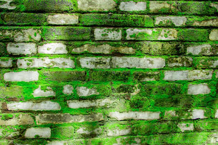 brick wall texture and background covered by moss with morning light Banco de Imagens