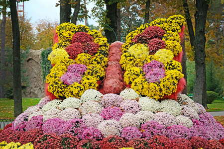 Butterfly made of chrysanthemums. Multi-colored bouquets of flowers laid out in the form of a butterfly in the autumn park. Sculptures of flowers decorating the city park in the fall.