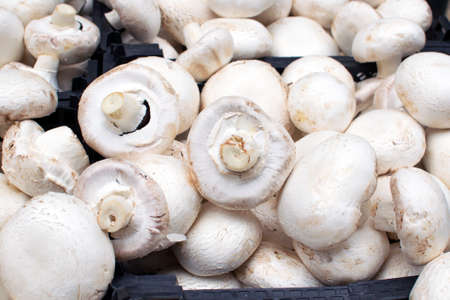 white champignons close-up, the benefits and harm of mushrooms, sale o
