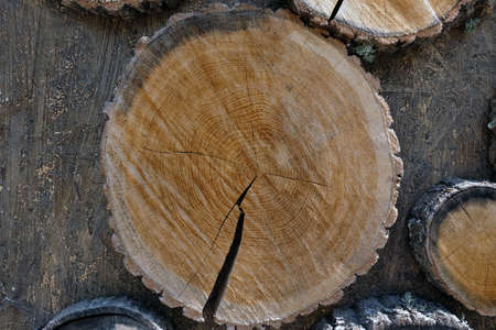 round-cut wooden stumps on the surface, the background of the wooden log