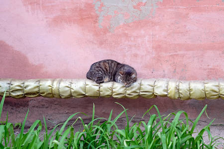 The cat sleeps on the street with a pipe with thermal insulation. Pipe house building and a homeless cat. Fluffy brown cat lies on a pipe against the background of a pink wall of a building.