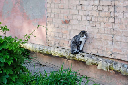 A gray cat sits on a pipe and warms up. The outer pipe along the building is wrapped in glass wool and the cat sits on top. Homeless animals near residential buildings.