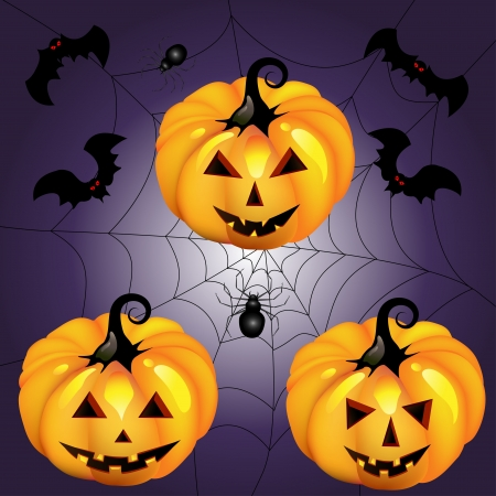 Halloween pumpkin with spider and bat night Vector