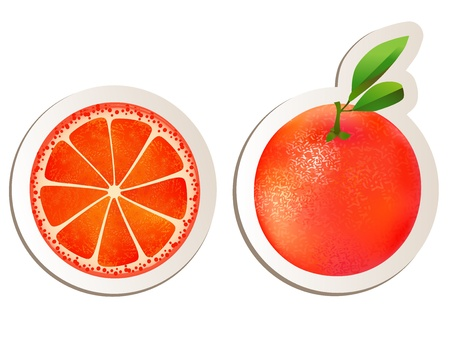 Grapefruit illustration on white Stock Vector - 15690864