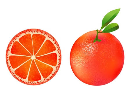 Grapefruit illustration on white Stock Vector - 15690860