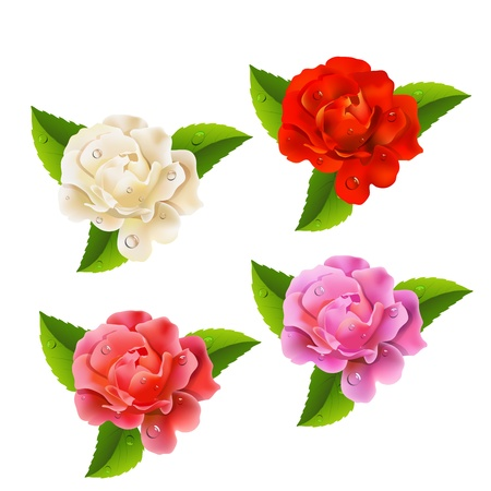 Set of roses on a white background Stock Vector - 19661413