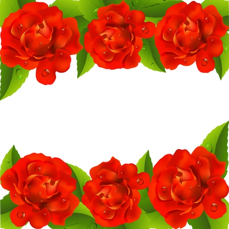 mildew:  Background with red roses