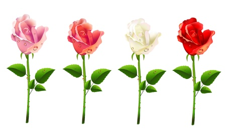 Set of roses on a white background Stock Vector - 19661416
