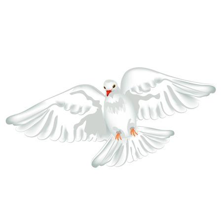 白いハトの飛行