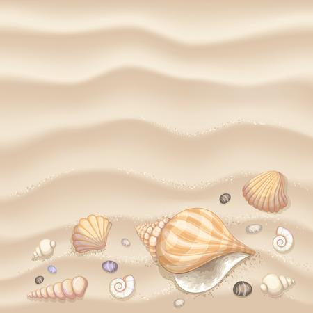 貝殻と背景