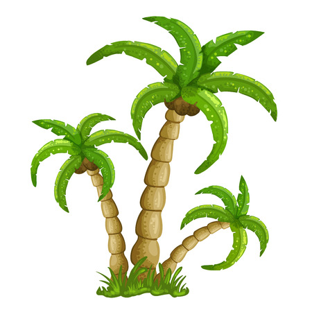 Illustration of the palm trees on a white background Çizim
