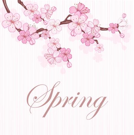 Kirschblüte, Zweig mit rosa Blüten. Vektorgrafik