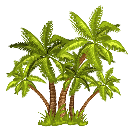 equator: Illustration of tropical palm trees Illustration