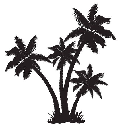 frond: Silhouettes of the coconut trees Illustration