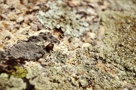 textura: insetto nella roccia Archivio Fotografico
