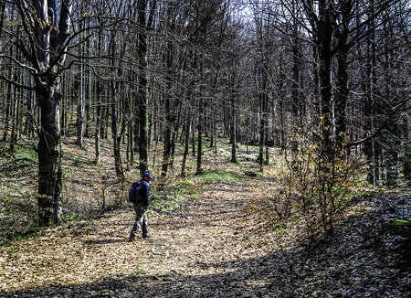 Man with backpack hiking in the woods in spring enjoying a sunny day. Reklamní fotografie - 39168133