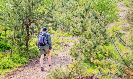short pants: Young man with backpack and short pants hiking through a pine forest. Stock Photo