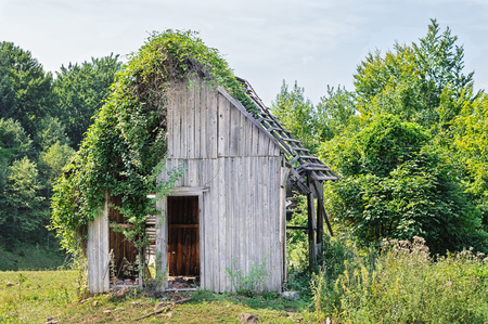 hovel: Abandoned wooden house in the forest half covered in ivy vines.