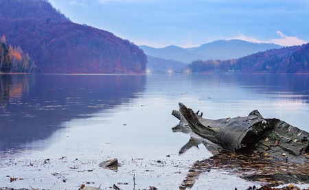 decompose: Large gray driftwood log floating in a lake in the evening in autumn.