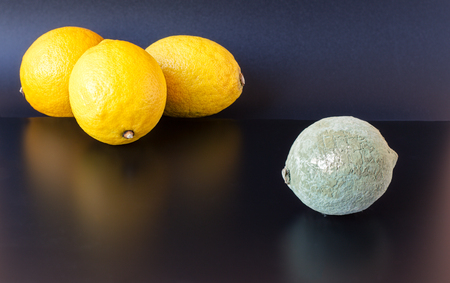 antithesis: Organic lemon covered in dry gray blue mold on a black background placed near three healthy ones.