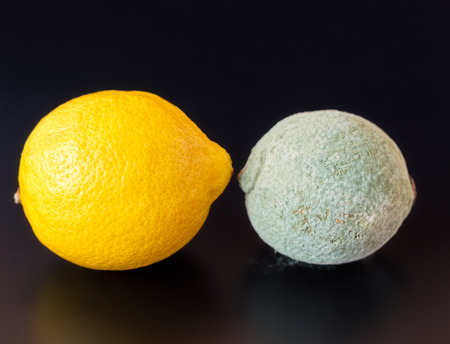 penicillium: Organic lemon covered in dry gray blue mold facing a healthy one on a black background. Stock Photo