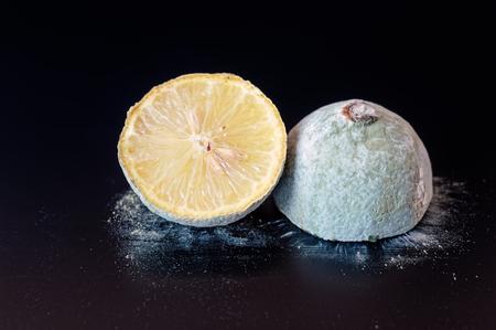 penicillium: Organic lemon covered in dry gray blue mold cut in half on a black board.