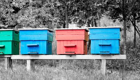 Four colorful painted beehives on a small wooden platform with black and white background. Reklamní fotografie