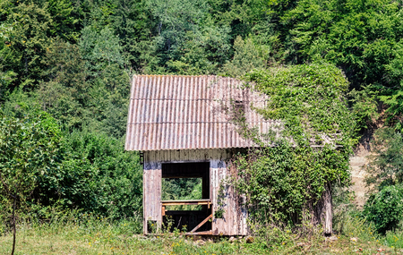 disintegrating: Abandoned wooden house in the forest half covered in ivy vines.