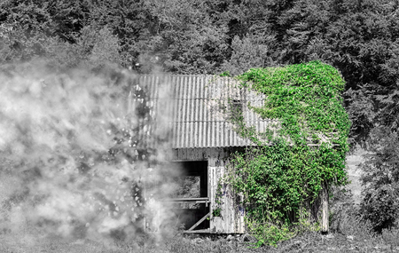 Partial black and white image of an abandoned wooden house in the forest half covered in green ivy vines disintegrating in small particles.
