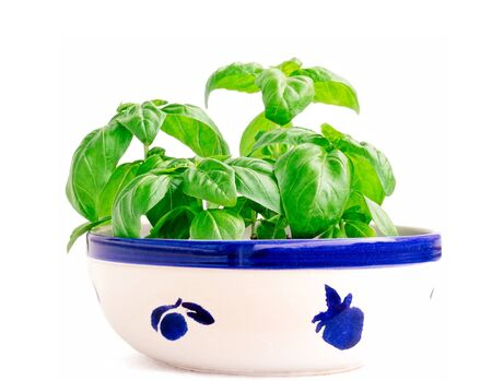 planted: Young basil planted in a ceramic painted bowl Stock Photo