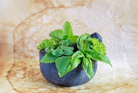 Gray granite mortar and pestle with herbs inside on a used parchment paper. Reklamní fotografie