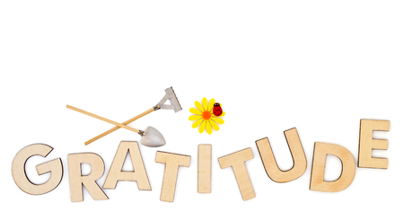 Top view of capital letters made of wood spelling the word gratitude isolated on white with yellow daisy, ladybug, miniature shovel and rake, cultivate gratitude concept. Reklamní fotografie