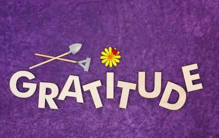 Top view of capital letters made of wood spelling the word gratitude on purple textured background with yellow daisy, ladybug, miniature shovel and rake, cultivate gratitude concept.