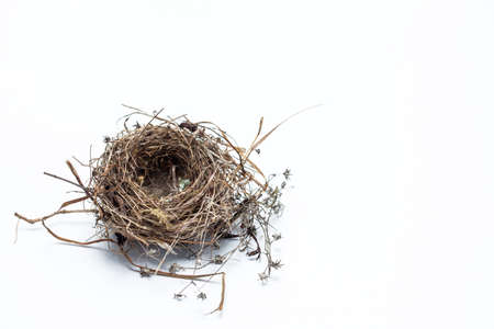 hotbed: Real bird nest isolated on white background