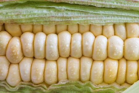 zea mays: Corn cob (Zea mays)